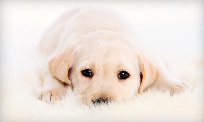 Texas Coalition for Animal Protection - Multiple Locations: $29 for Dog Wellness Package with Vaccinations and Deworming at Texas Coalition for Animal Protection ($60 Value)