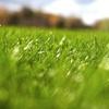 50% Off Fertilizer or Tick Treatment from Real Green LLC B-2008