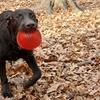 Gnawsome Light Up and Squeak-Ball Dog Toys