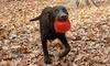 Gnawsome Light Up And Squeak Ball Dog Toys Groupon