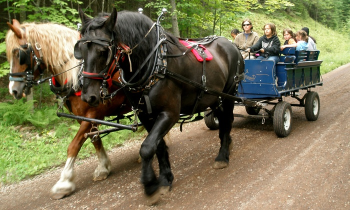 Positive Energy Outdoors - Fredenberg: Draft-Horse Wagon Ride and Sled-Dog Kennel Tour at Positive Energy Outdoors (Up to 53% Off). Four Options Available.