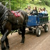 Up to 53% Off Horse-Drawn Wagon and Outdoor Experience