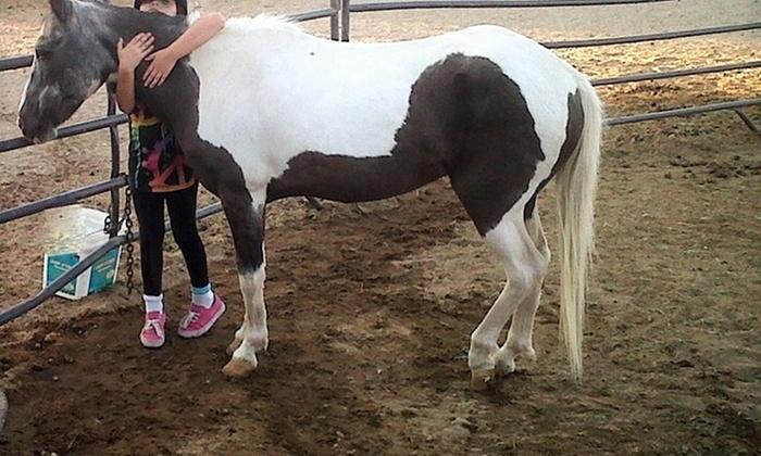 Healing Hands Horsemanship - Reno: Two Horseback-Riding Lessons at Healing Hands Horsemanship (50% Off)