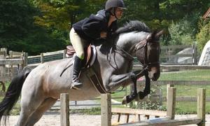 Caer Avallach Farm LLC: Three Horseback-Riding Lessons at Caer Avallach Farm LLC (45% Off)