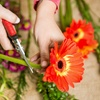 Up to 59% Off Beginner Floral Design Class
