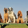 Up to 54% Off Doggy Daycare