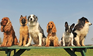 Camp Bow Wow: One or Three Days of Doggy Daycare at Camp Bow Wow (Up to 54% Off)