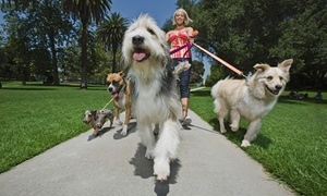 Sitters 4 Critters, LLC: Pet Boarding for Two or Four Nights, or Five or Ten Dog Walks from Sitters 4 Critters (Up to 61% Off)