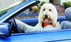Amys Wohlfühlvilla - Amys Wohlfühlvilla: Meckl. Seenplatte: 3, 4 oder 6 Tage für 1-2 Pers. und 1x Hund mit Frühstück, Hundemassage und Spa in Amy's Wohlfühlvilla