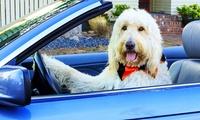 Meckl. Seenplatte: 3, 4 oder 6 Tage für 1-2 Pers. und 1x Hund mit Frühstück, Hundemassage und Spa in Amy's Wohlfühlvilla