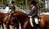 Prestige Pets at Gaston Farm - Boxford: Two Group or Private Riding Lessons or One Week of Riding Camp from Prestige Pets at Gaston Farm (Up to 50% Off)