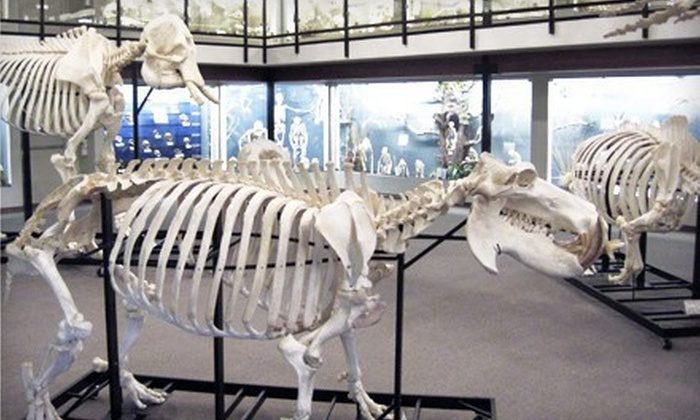 Museum of Osteology - Southeast Oklahoma City: Visit for Two or Four to the Museum of Osteology (Half Off)