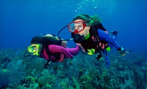 Tropical Adventures Scuba and Travel: $110 for a PADI Open-Water Scuba-Certification from Tropical Adventures Scuba and Travel ($424 Value)