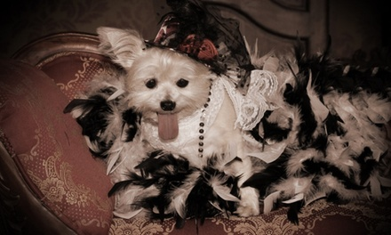 30-Minute Pet Photo Shoot from Four Sisters Old Time Photo LLC