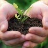 50% Off Fertilizer Treatment from Lawn Solutions