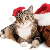 Up to 67% Off Holiday Pet Packages
