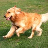 48% Off Dog-Walking Services