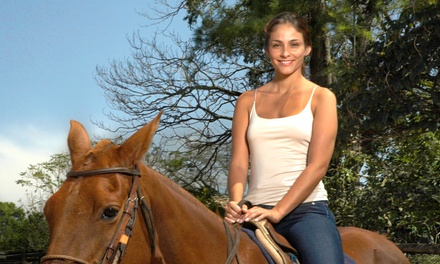 Horseback Trail Ride for One, Two, or Four at Happy on Hooves (Up to 65% Off)