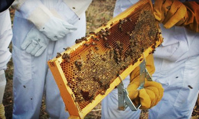 Round Rock Honey - Copper Canyon: Three-Hour Introductory Beekeeping Class for One or Two at Round Rock Honey (Up to 66% Off)