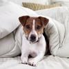 43% Off Pet Microchipping