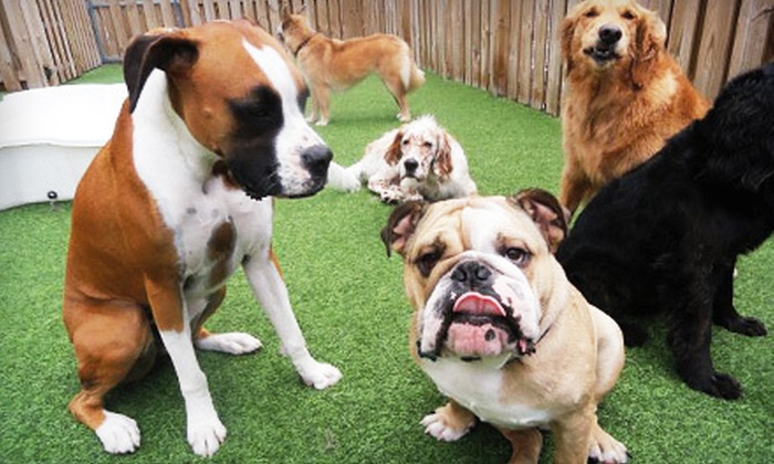 Camp Canine - Multiple Locations: One-Day Doggy-Daycare Trial with 2 or 3 Nights of Boarding or 10 Days of Daycare at Camp Canine (Up to 73% Off)