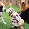 Up to 73% Off Doggy Daycare and Boarding