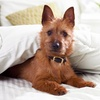 Up to 54% Off Walks or Pet-Sitting