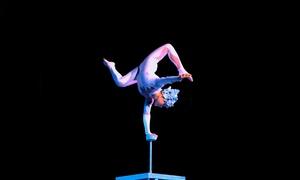 Magnifico Circo Acquatico: Magnifico Circo Acquatico dal 26 febbraio al 7 marzo a Viterbo (sconto fino a 50%)