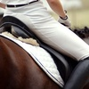 Up to 50% Off Horseback Riding