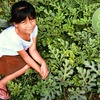 $10 Donation to Help Farm Worker's Family Start Home Garden