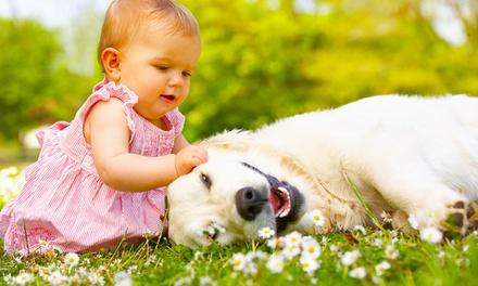 Sesión de fotos para bebés, familias, grupos o mascotas con CD de imágenes y 5 o 10 impresas desde 24,90 €