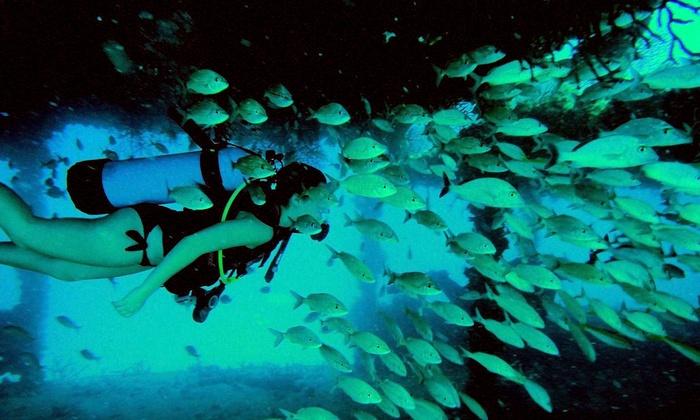 Aquatic Ventures - Up To 63% Off - Fort Lauderdale, FL | Groupon
