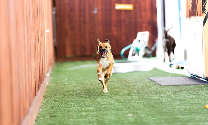 Wag Hotels - Sacramento: 5 or 10 Days of Doggy Daycare for One Dog at Wag Hotels (Up to 51% Off)