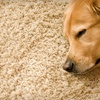 Up to 73% Off Organic Carpet Cleaning