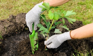 Lyon Landscape Nursery Inc: $28 for $50 Worth of Trees — Lyon Landscape Nursery