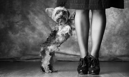 Pet Photoshoot with Print