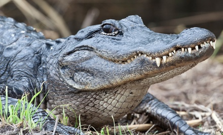 $16 for Family Visit for Five with Alligator Holding and Feeding at The Alligator Attraction ($33 Value)