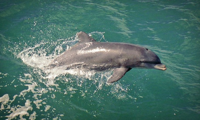 Adventures in Paradise - Punta Rassa: Sunset Dolphin-Watching Cruise for Two Adults or One Child from Adventures in Paradise (Up to 53% Off)