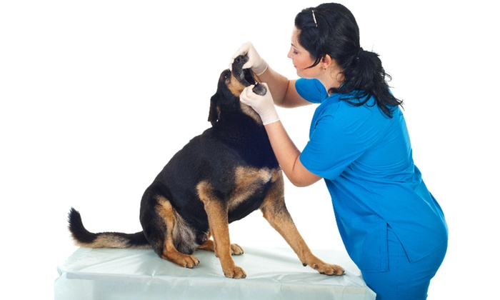 EZ Vet Pet Health Care Center - Pinecrest: Physical Exam and Dental Cleaning with Scaling for Dogs or Cats at EZ Vet Pet Health Care Center (Up to 75% Off)