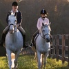 64% Off Horseback-Riding Lessons at Hampton Hill Stables