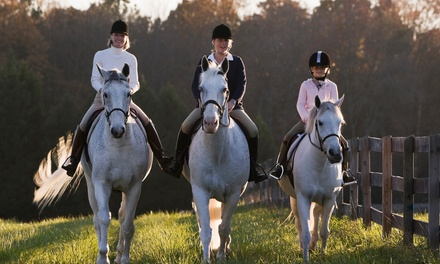 $59 for Five Horseback-Riding Lessons at Hampton Hill Stables ($165 Value)