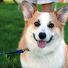 Up to 59% Off Dog Walking from Dog Fit Unlimited