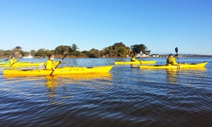 Pacific Outfitters: Three-Hour Kayaking Tour for Two, Four, or Six from Pacific Outfitters Adventures (Up to 57% Off)