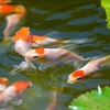 44% Off Pet Fish or Aquatic Plants at Neighborhood Fish Farm