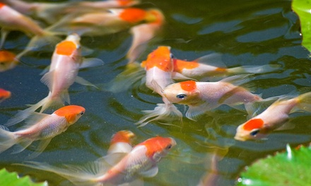 $14 for $25 Towards Live Tropical Fish or Live Aquatic Plants at Neighborhood Fish Farm (44% Off)