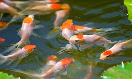 $14 for $25 Towards Live Tropical Fish or Live Aquatic Plants at Neighborhood Fish Farm (44% Off)
