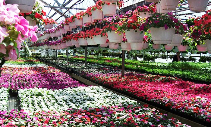 Willow Greenhouse - Northville: $11 for $20 Worth of Plants and Accessories at Willow Greenhouse