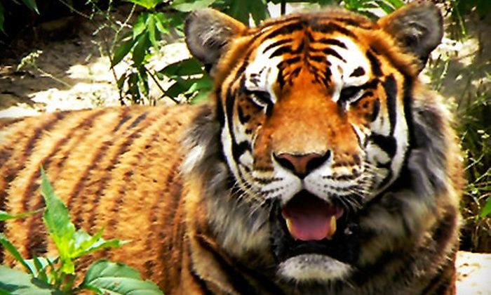 National Tiger Sanctuary - Saddelbrooke: Awareness Tour for Two Adults with Option for Two Children at National Tiger Sanctuary (Up to 53% Off)