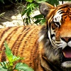 National Tiger Sanctuary – Up to 53% Off Tour