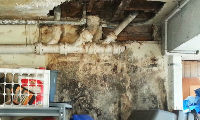Novel Remodeling - Los Angeles: $149 for a Mold Inspection and Test from Novel Remodeling ($400 Value)